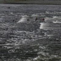そこには暗い川がある…多摩川冬景色シリーズ