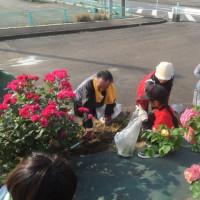 福山港バラ花壇清掃ボランティア