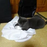 小豆ちゃんは、カバンには興味ありません!