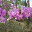 清里の森では花々が競演中