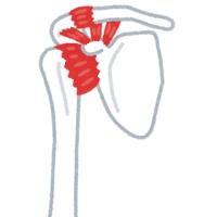 先週末は腕の症例報告に参加してきました。