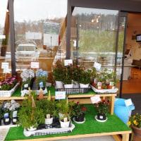 軽井沢のいろいろ 軽井沢の花屋の店先は・・