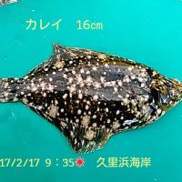 笑転爺の釣行記 2月17日☀☂ 久里浜海岸