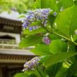 日曜日の鎌倉