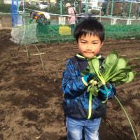 小松菜、ほうれん草、ノラボウ