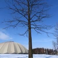 冬の日の百合の木