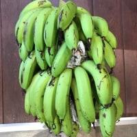 奄美のバナナは緑色!!