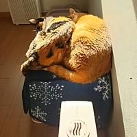 年末の猫のホテルの予約状況(その8)