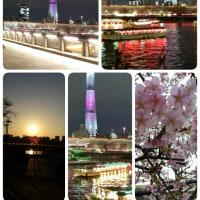 スカイツリー・花見❀✿隅田川