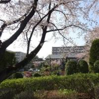 椿峰ニュータウン周辺の4月