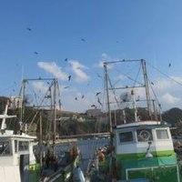 雑賀崎漁港へ