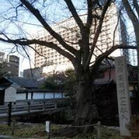 京都のたび(3)朝の散歩