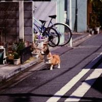 コダクローム25で撮った15年くらい前の横浜中華街