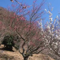スポコミ・カワラ版 3月27日(月)先勝