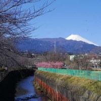 富士山の日とプリティワンコ