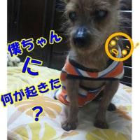 どーしたのロン君((+_+))