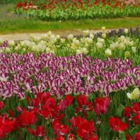 昭和記念公園の花風景