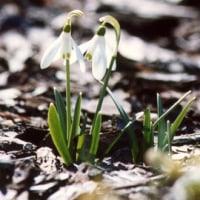 春、春、春です。