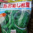 枝豆の種蒔き(炎天下編)