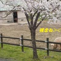 「岐阜市畜産センター友の会」廃止メール・・・;;