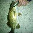 釣りに行きました( ´△`)