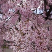 春のウォーキング