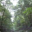 三重~和歌山の旅 1(瀧原宮)
