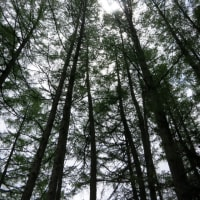雨のち晴れ、森林浴