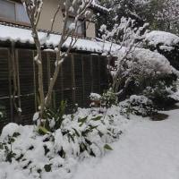 ~~~  初雪 ~~~