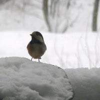大雪の交通災害