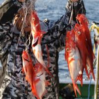 <04/29> 石廊キンメへ 大漁!