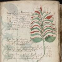 ヴィオニッチ手稿