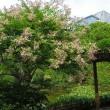 皇居東御苑(オニユリ)