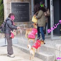 瀬戸内海ワンコ旅♪犬島編