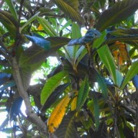 常緑樹の世代交代