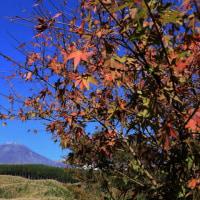富士山 初冠雪 ⇒ パート3 ススキ 原野から...