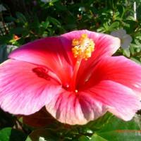我家の花達とその他 2016年10月-2 第143号