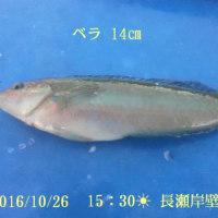 笑転爺の釣行記 10月26日☀ 浦賀・長瀬