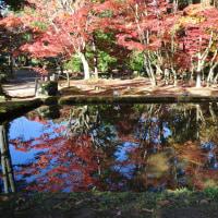 曽木公園の「もみじライトアップ」が、今年も賑やかだ!