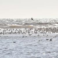 海鳥の群れ!!