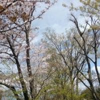フラレッスン♪春(kupo lau)いっぱい