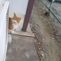 可愛い、姫猫