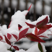 267  雪が降った