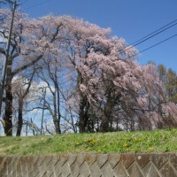 しだれ桜と八ヶ岳