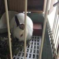 ウサギのパルちゃん9歳