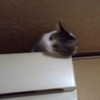 暖房に 愛を感じる 猫在(あ)りて