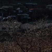 2月24日(金) 信州へ 出先から