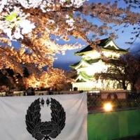 仮天守夜桜(さくらまつり29)