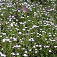 園芸種、山野草、雑草 それぞれに美