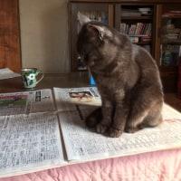 新聞にのる